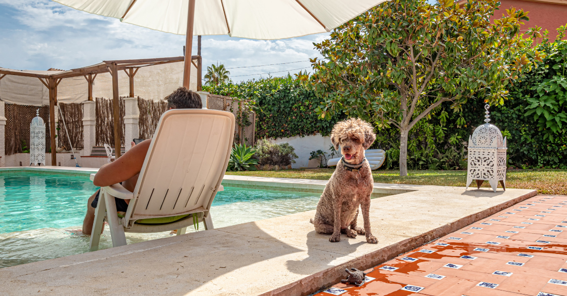 Airbnb guest sitting by the pool with his dog