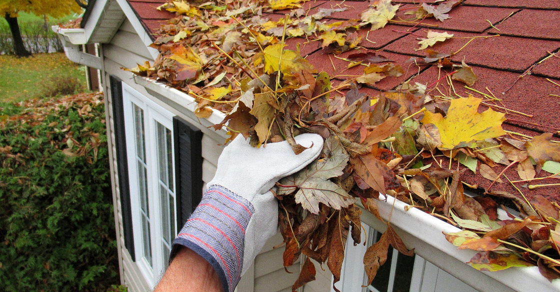 Cleaning leaves out of a gutter