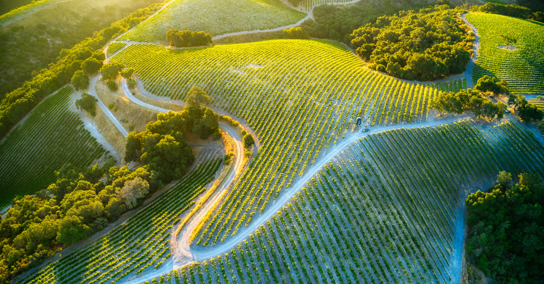 Vineyards, wine country California
